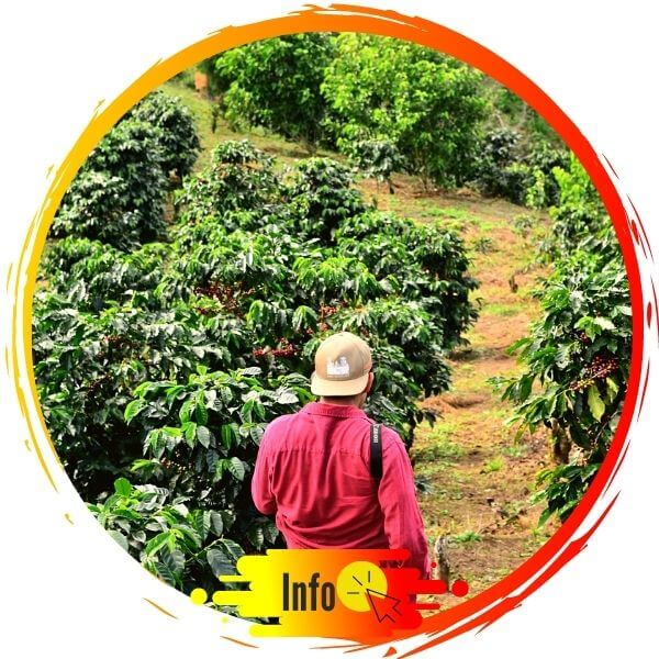 tour eje cafetero colombia
